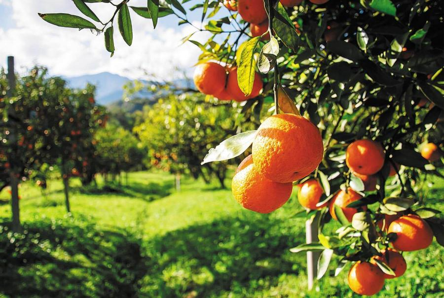 reasons to travel to andalucia orange groves