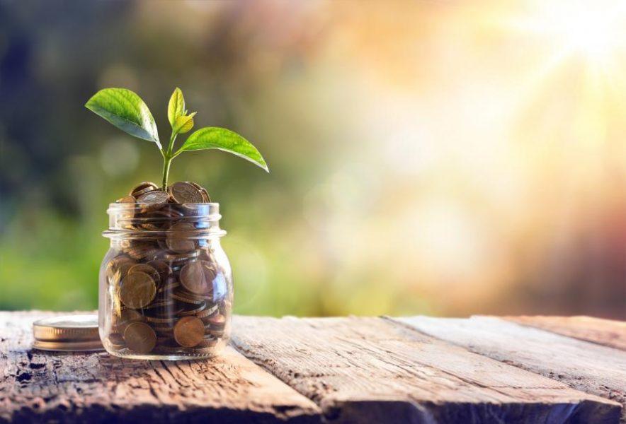 Plant growing in savings
