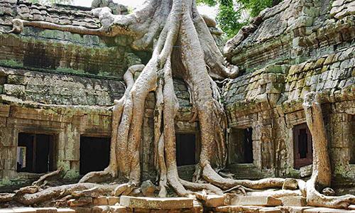 Incredible tree roots growing over ruins at Angkor Wat