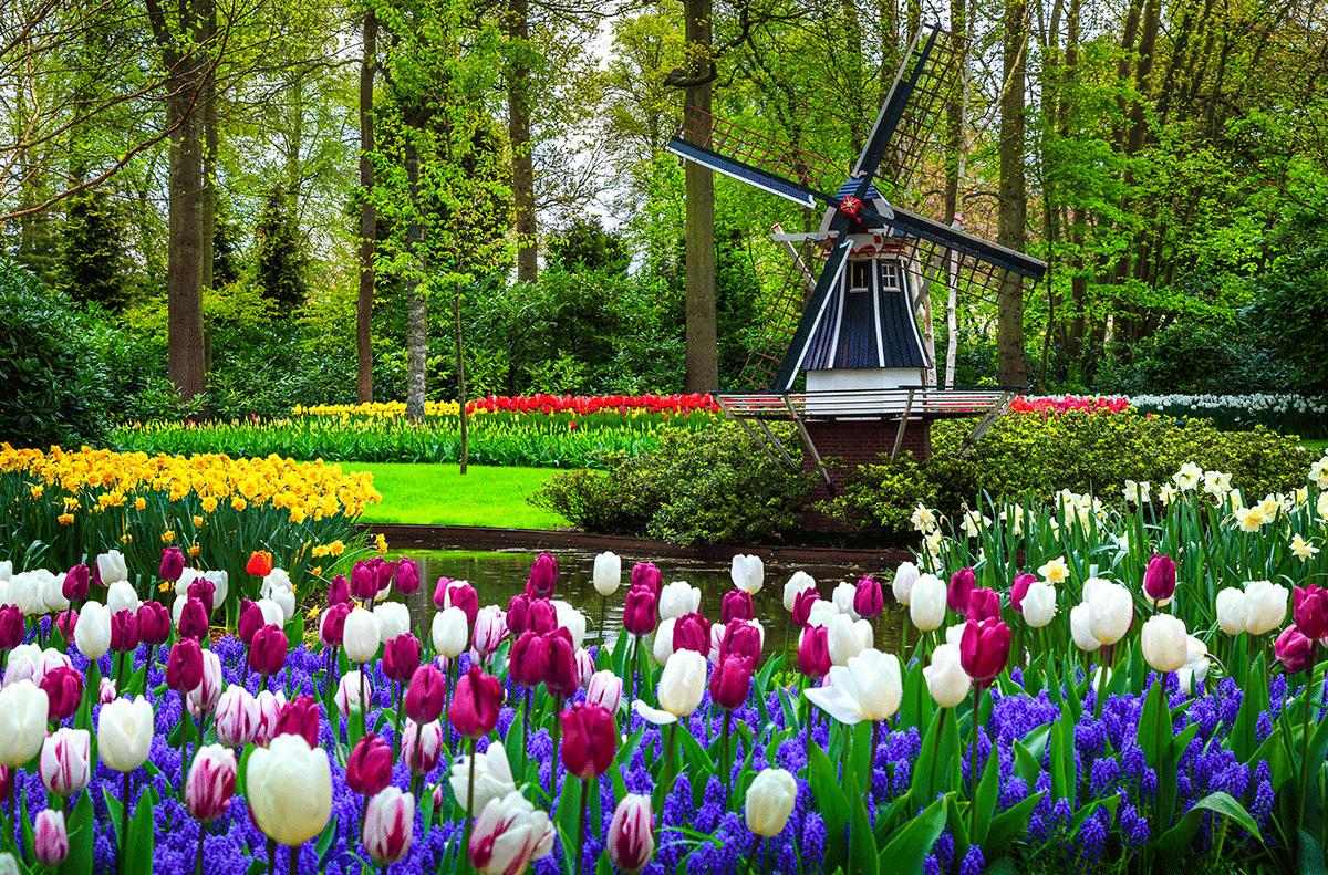 spring river cruise keukenhof gardens