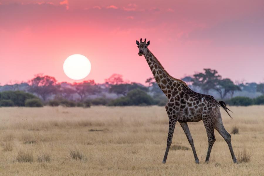 best escorted tour of india giraffe botswana