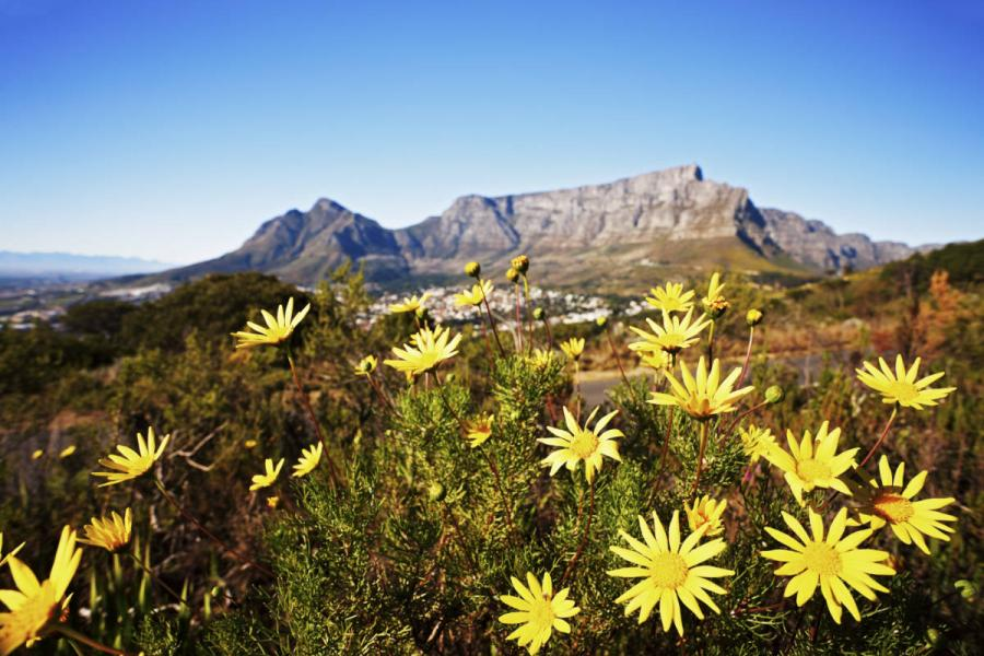 top 10 UNESCO world heritage sites cape floral region south africa