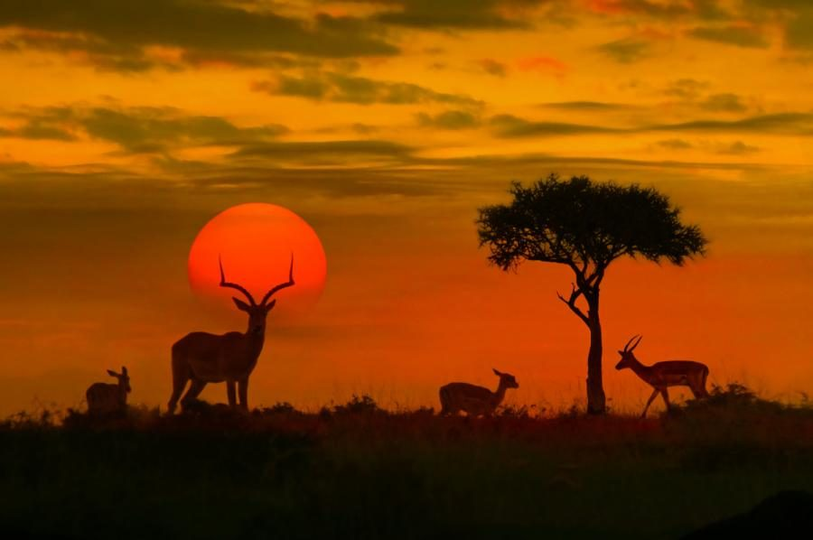 What to Wear on Safari African Sunset