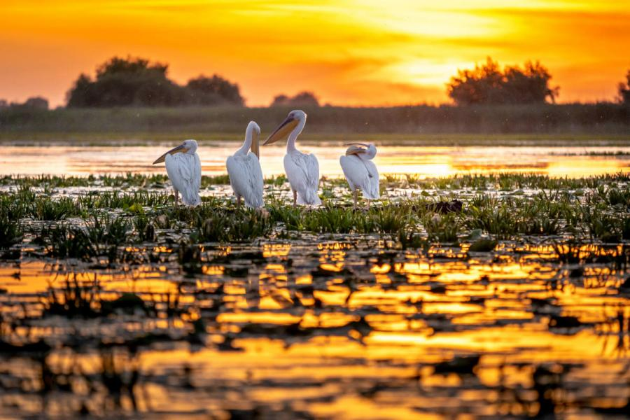 what to know about danube river cruises delta romania pelicans at sunrise