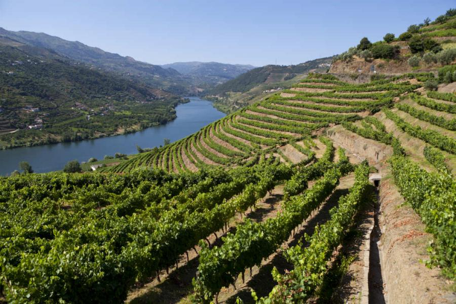 port tasting in porto  vineyards in the douro valley