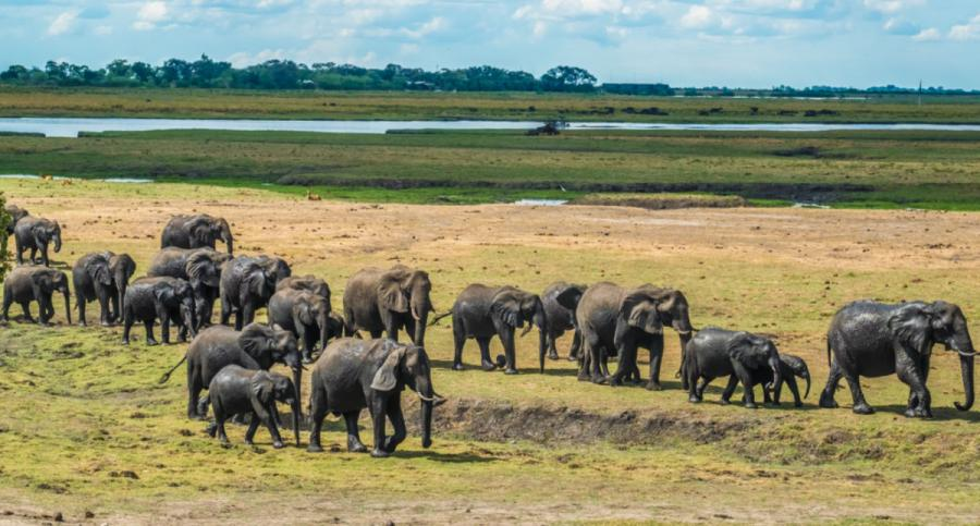 best safari in africa elephants chobe national park botswana