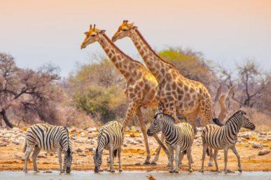 Best Safari in Africa – 5 Great African Safari Holidays 2020