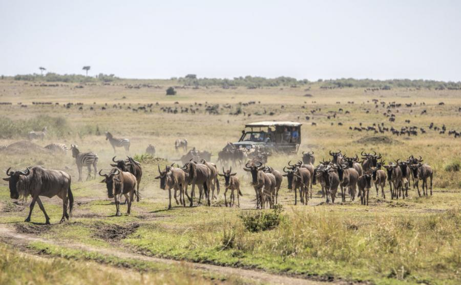 best safari in africa wildebeests masai mara kenya