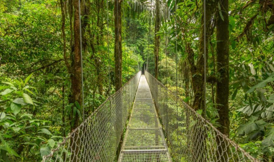 costa rica tours hanging bridge