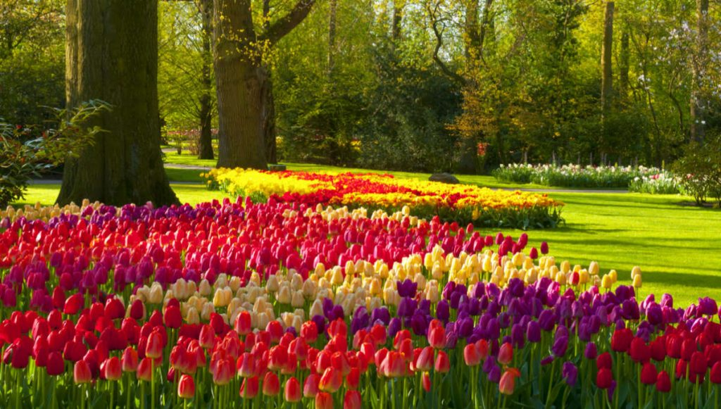 Europe bucket list Keukenhof Gardens