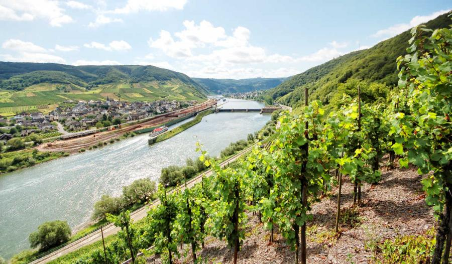 Moselle mosel river vineyard