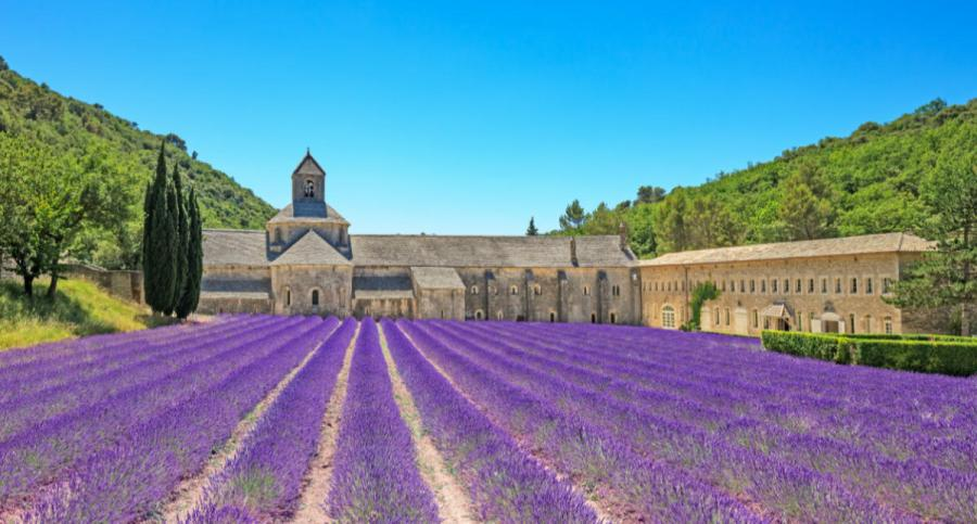 provence senanque abbey gordes amid lavender fields