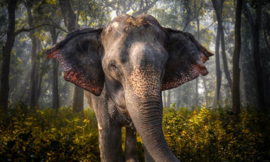 wildlife travel elephants in chitwan nepal
