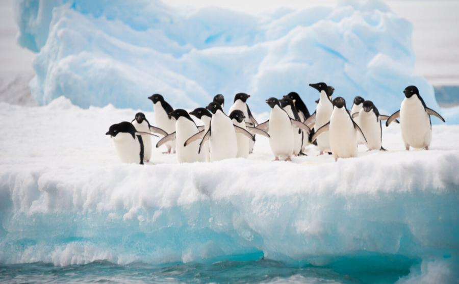 wildlife travel penguins antarctica