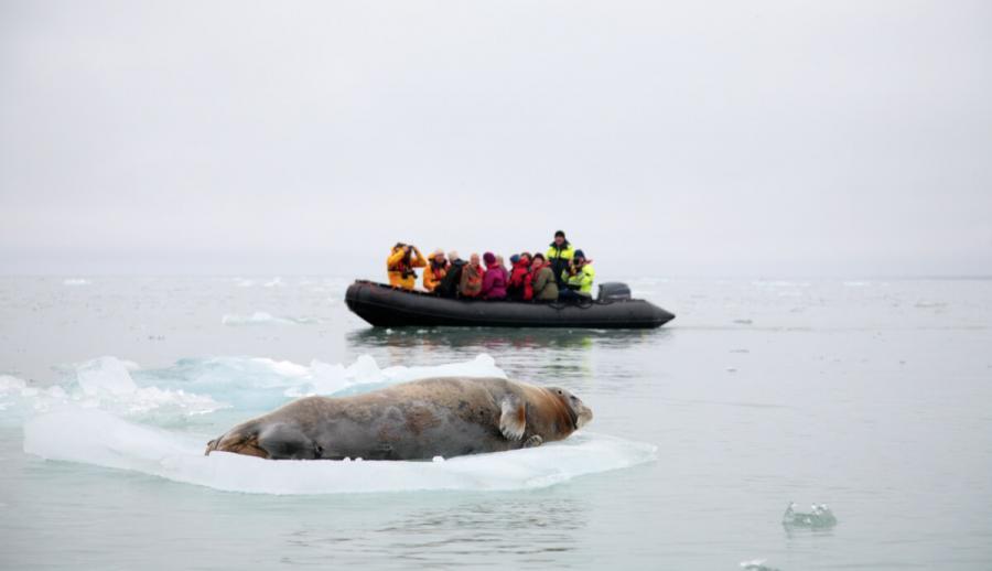arctic cruise arctic tourists