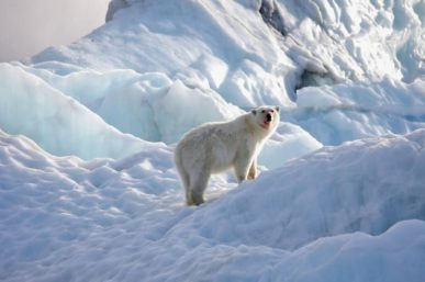 How to Choose an Arctic Cruise