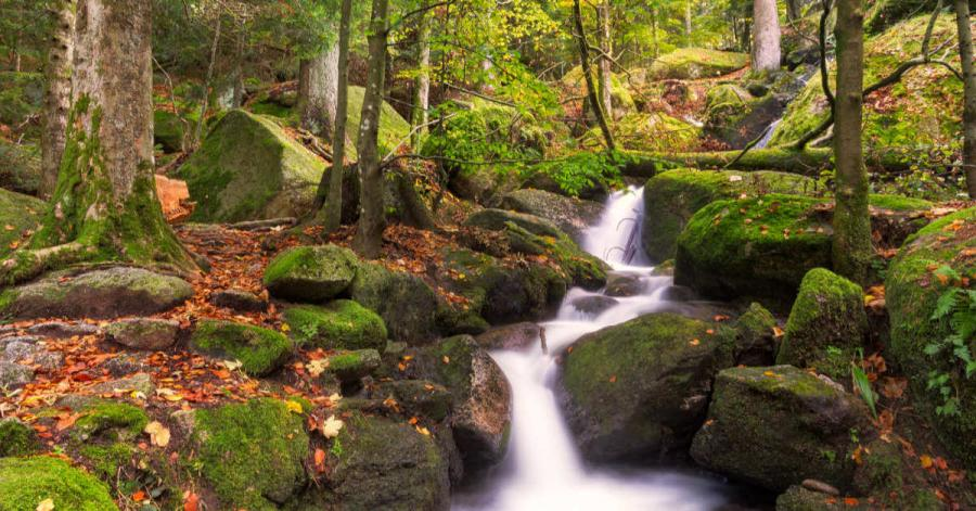 Natural Wonders of Europe | Black Forest