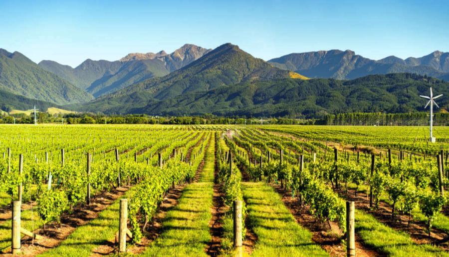 wine tasting tours marlborough new zealand
