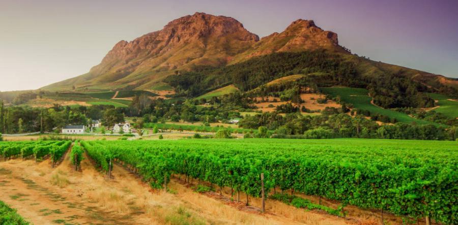 wine tasting tours stellenbosch western cape