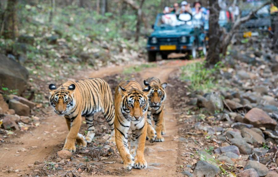 things to do in india visit ranthambore national park