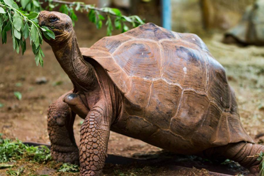 galapagos island holidays giant tortoise