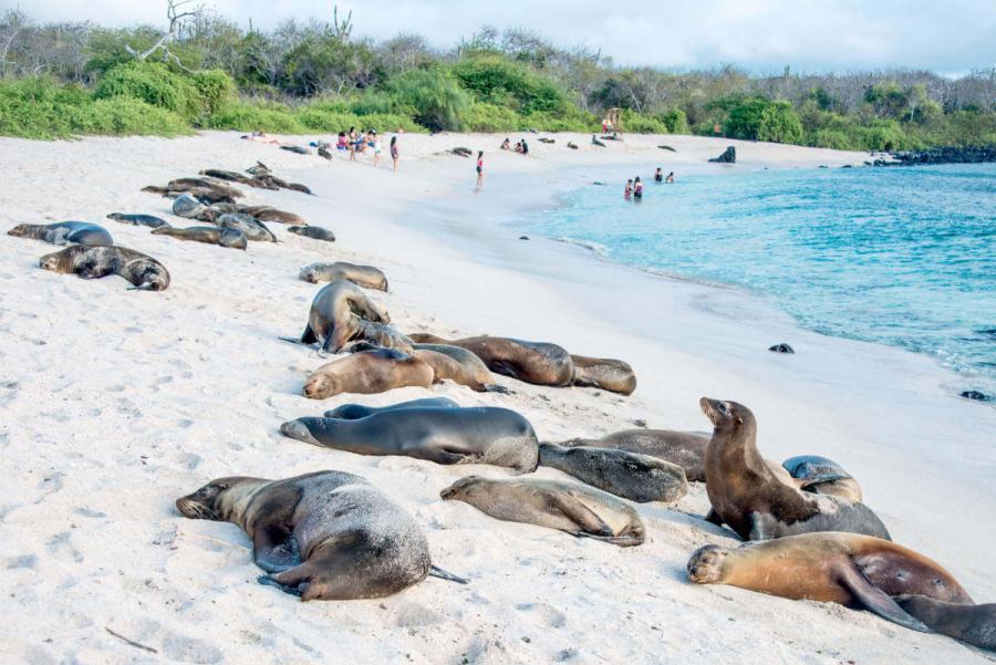 galapagos island holidays sea lions