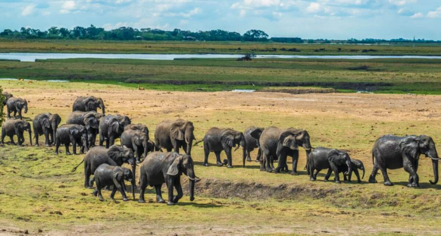 places to visit chobe national park botswana