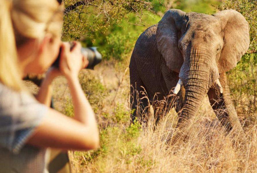 safari photography be safe
