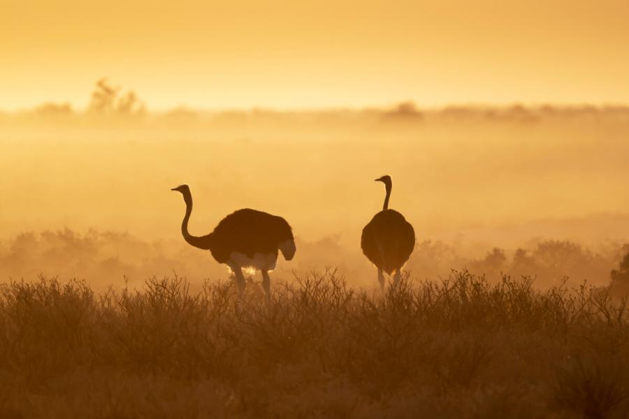 safari photography shoot at dawn ostriches at dawn etosha national park namibia