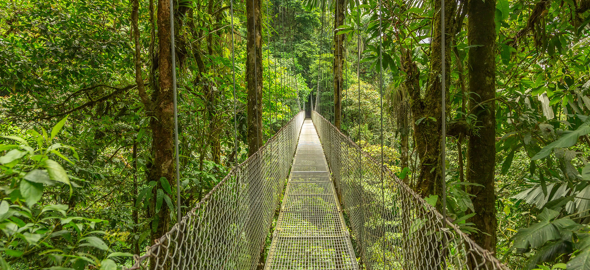 Costa Rican Rainforest | Tours to Central and South America