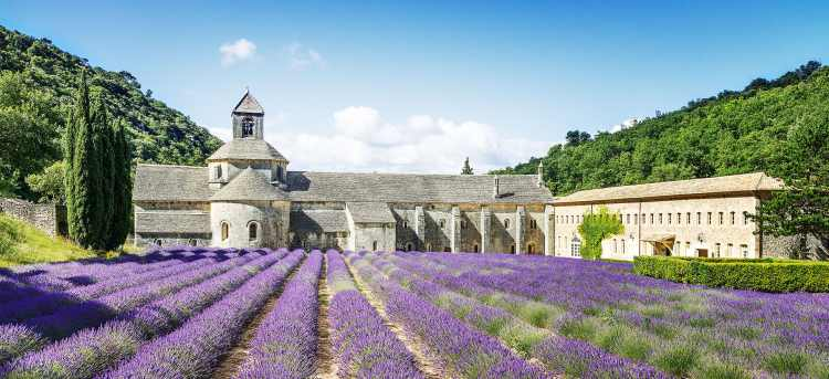 Lavender field | Provence | France  | Riviera Travel | escorted tour | walk | discover