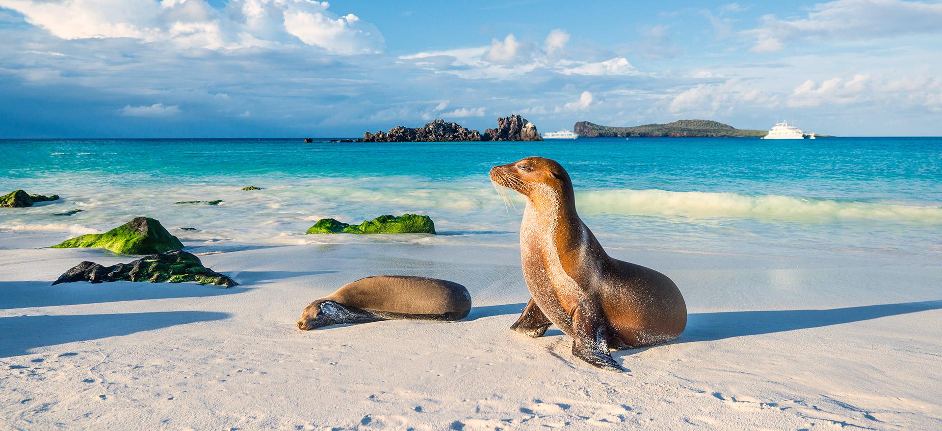 Ecuador & Galapagos - Sea lions on beach