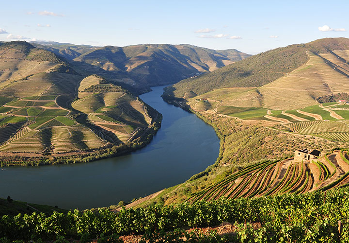 Vineyards of Douro river valley