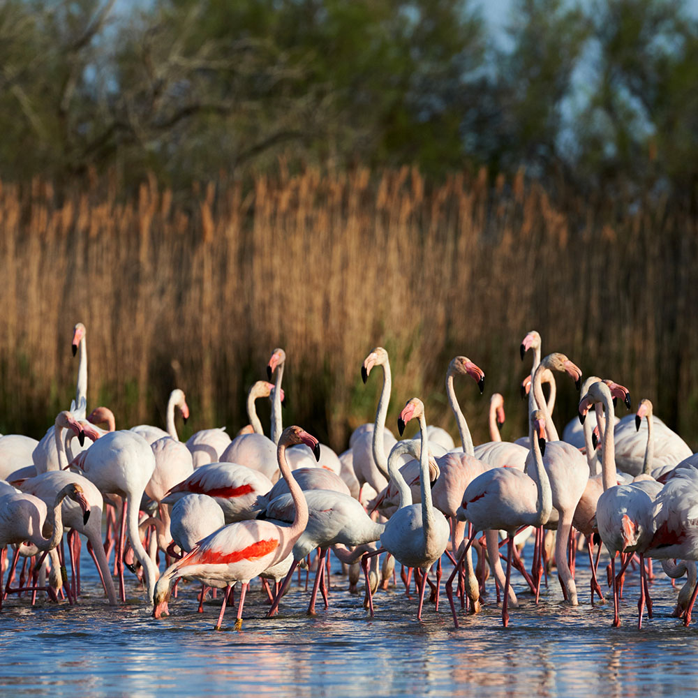 DISCOVER: THE CAMARGUE