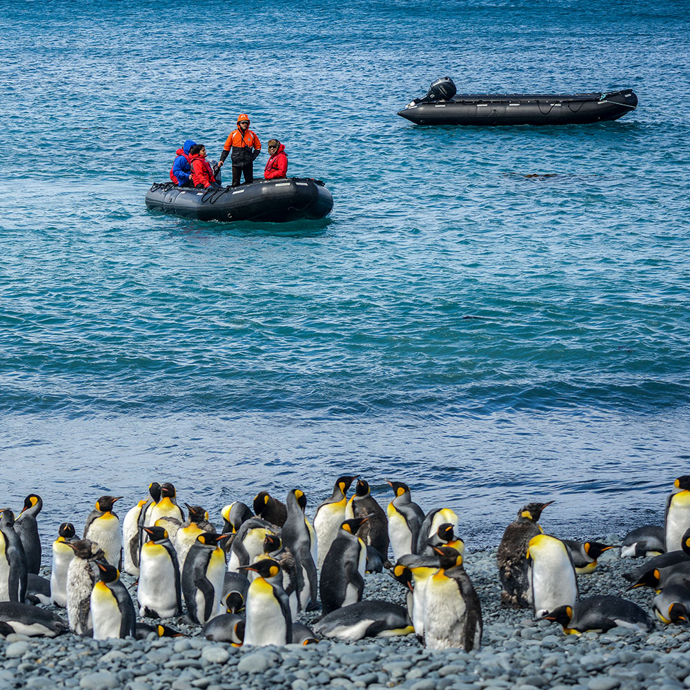 SOUTH SHETLAND ISLANDS & ANTARCTIC PENINSULA