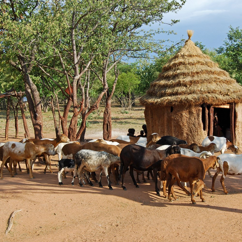 HIMBA TRIBAL VILLAGE